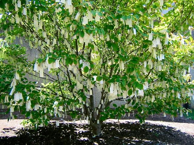 A Yoko Ono Wish Tree in Washington, DC from Healing Landscapes