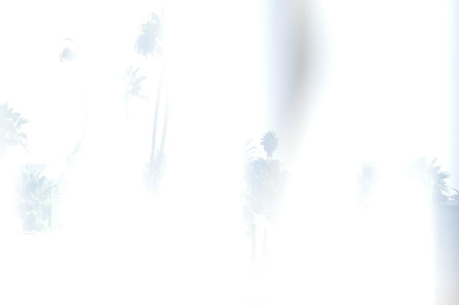 jesse_hoy_white_trees_small_1024x1024