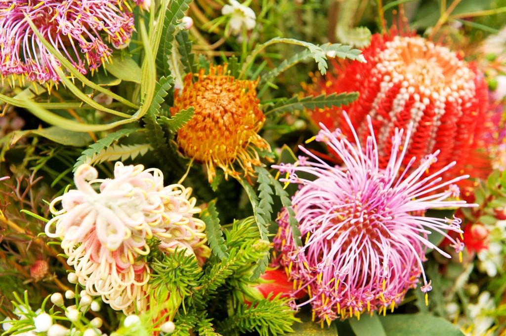 33_1australian_bush_flowers