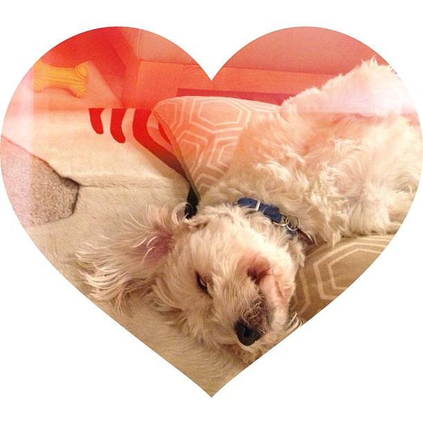 puppy_sleeping