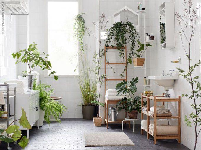 dreamy plants