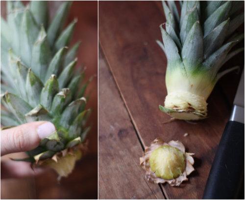 pinapple growing