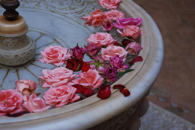 morccan rose