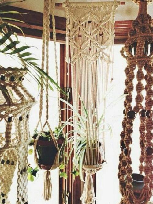 plants hanging