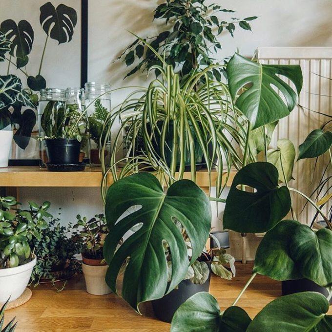 room full of plants by haarkon