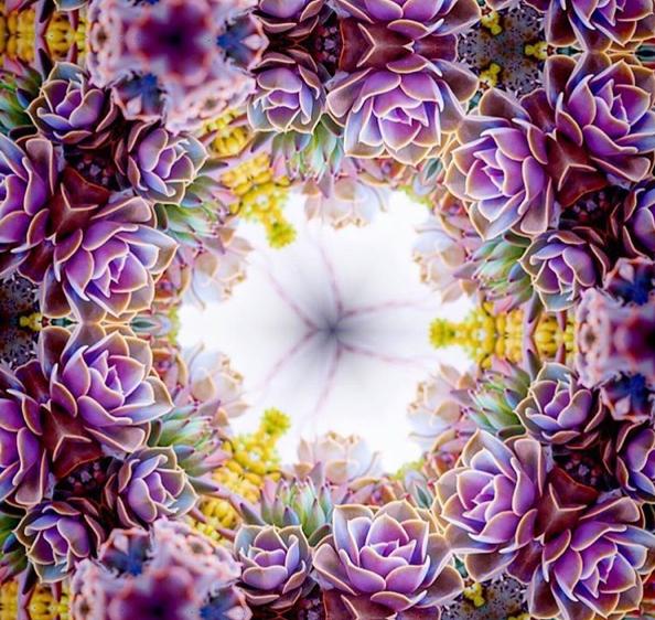 succulent kaleidoscope